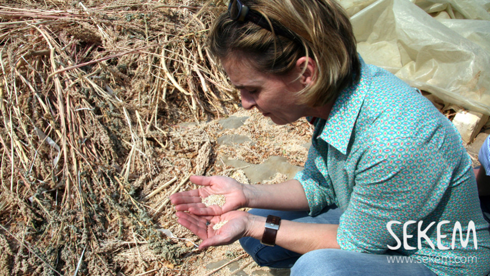Sigrid Ahrens examines the experimental cultivation of quinoa on the SEKEM farm.