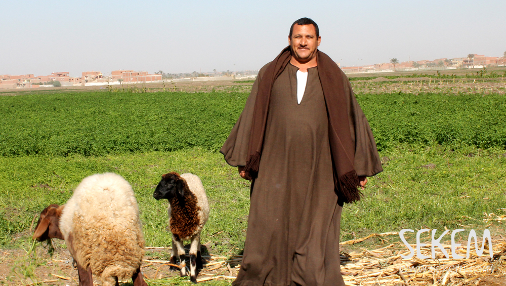SEKEM Contracted Farmer on his field
