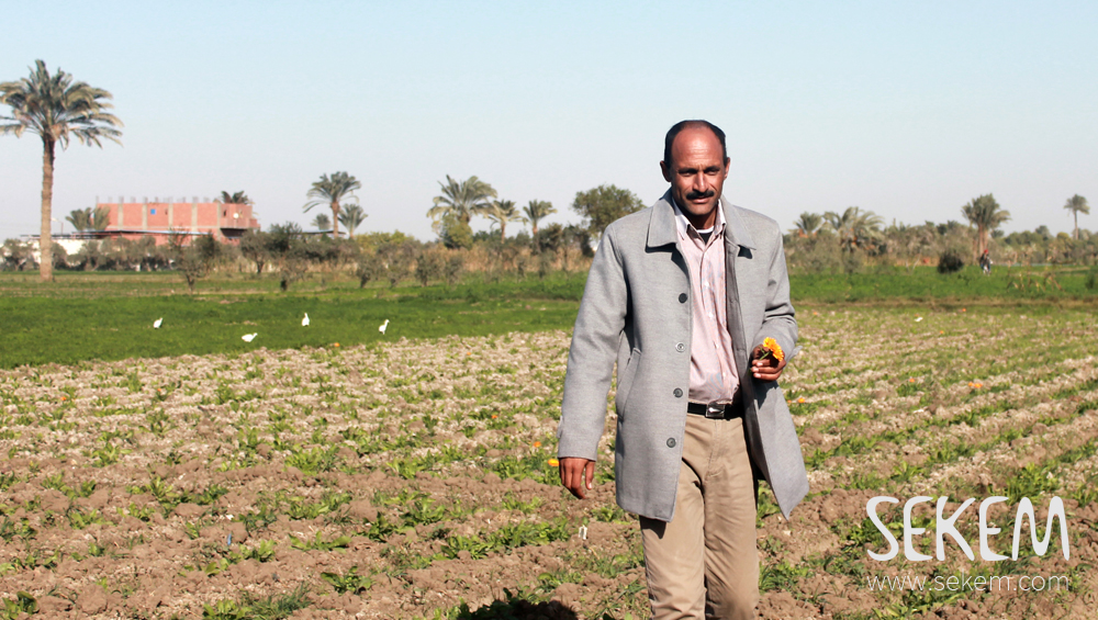 Mahmoud Farouk, one of SEKEMs contracted farmers on his field in Fayoum.