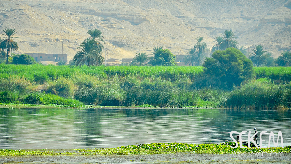 Fertile soil along the Nile