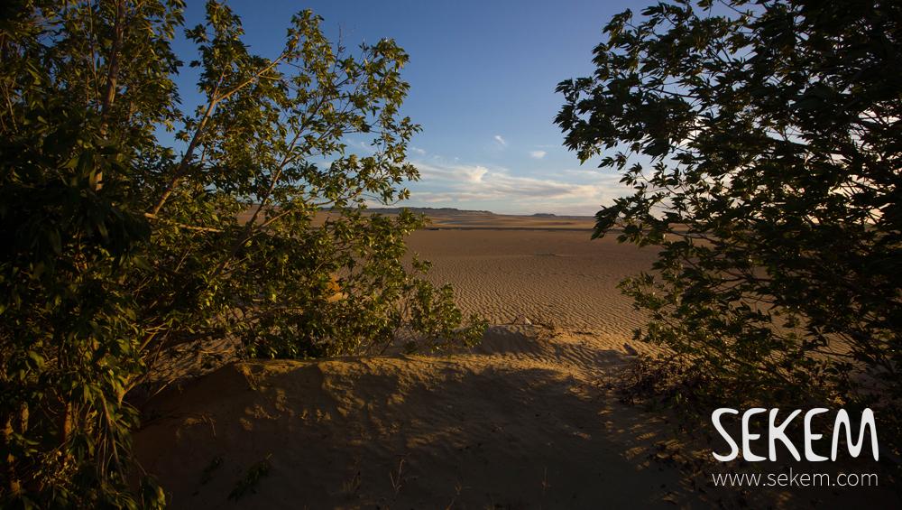 Trees on SEKEMs Farm in the desert