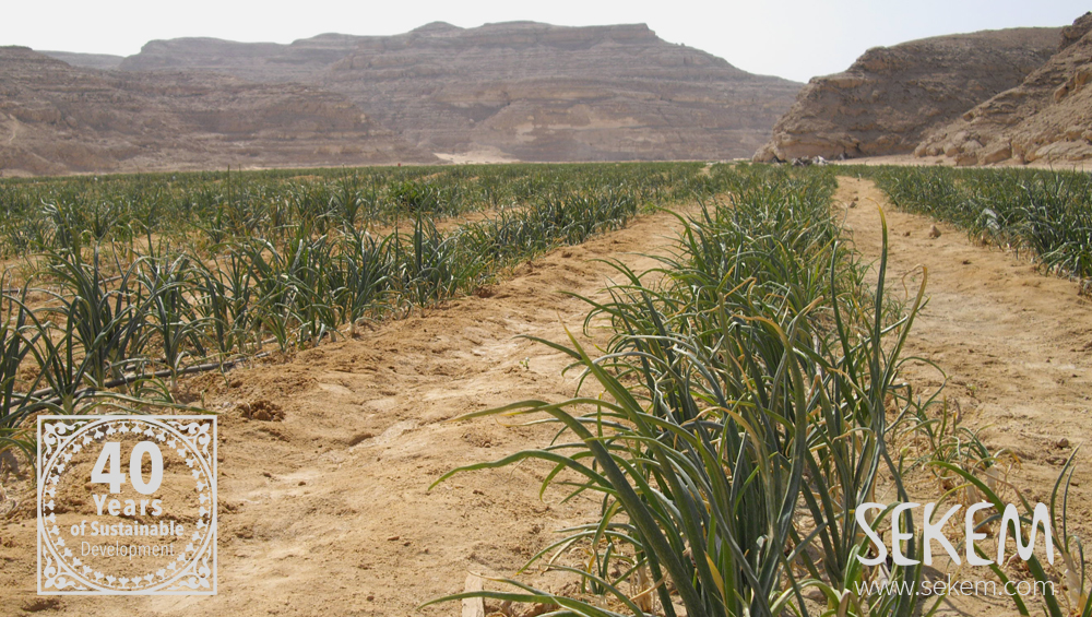 Team Up against Desertification: UNCCD Partners with the WFC