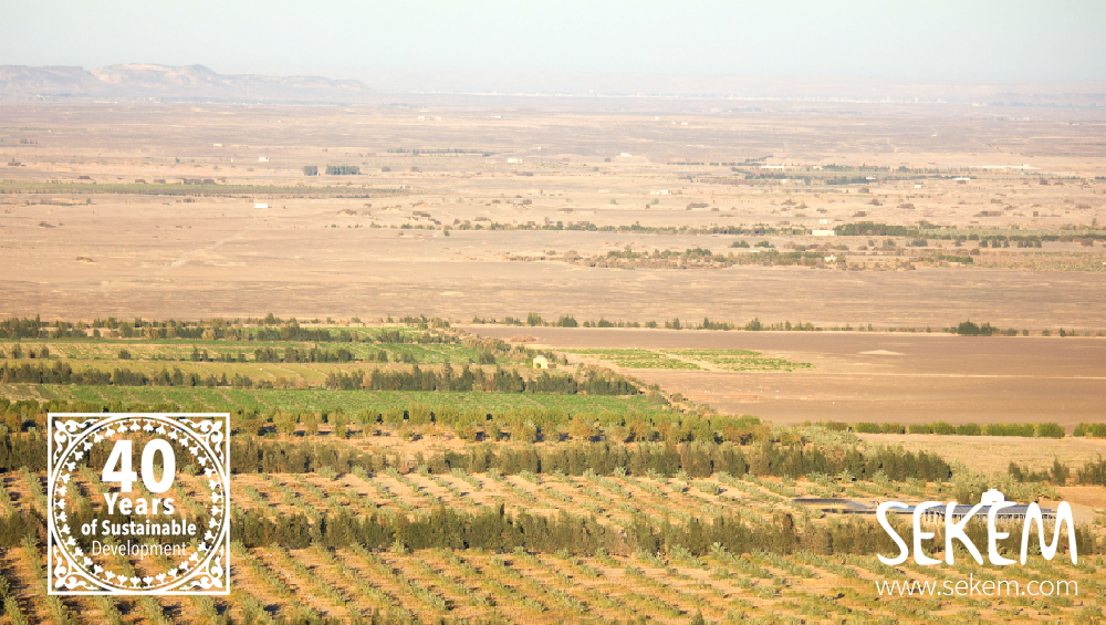 SEKEM is Combating Desertification in Egypt