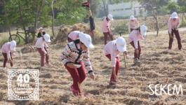 100% Organic Agriculture: SEKEM Children Start to Transform Egypt