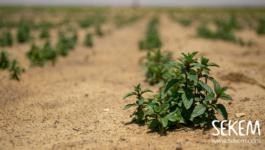"""Es wird grüner und grüner: Update zu """"Greening the Desert""""-Kampagne"""