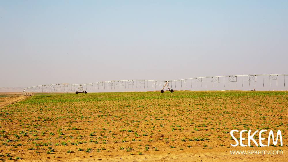 The first pivot irrigation system brought already the very first plants to life. Support us in finanzing two further solar powered irrigation systems to green 63 hectares desert land with sustainable agriculture.