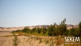 """أول مشروع معتمد من """"المعيار الذهبي"""" في مصر والشرق الأوسط: """"مشروع أشجار سيكم"""""""