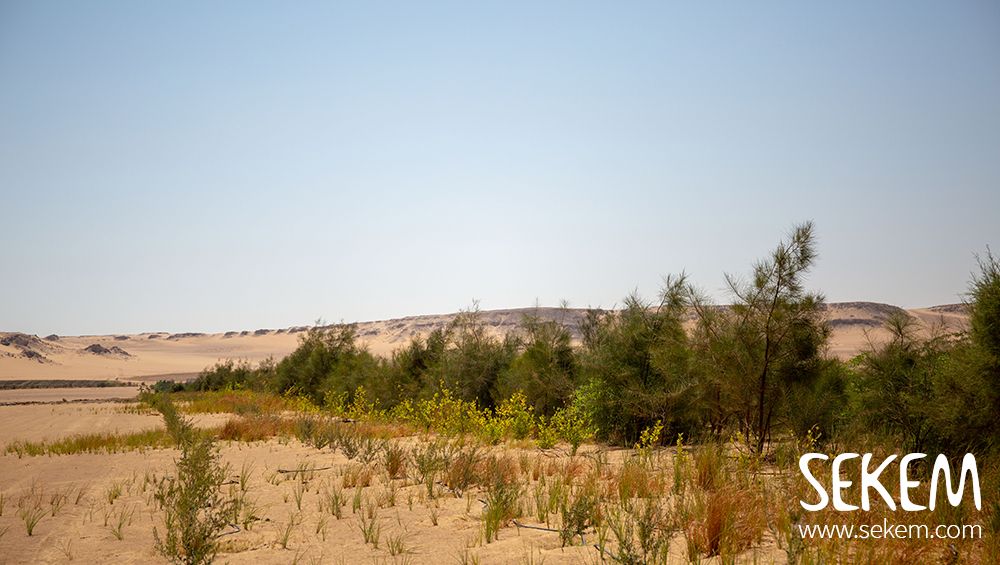 """Erstes nach Gold Standard zertifiziertes Projekt in Ägypten und im Nahen Osten: """"SEKEM Tree Project"""""""