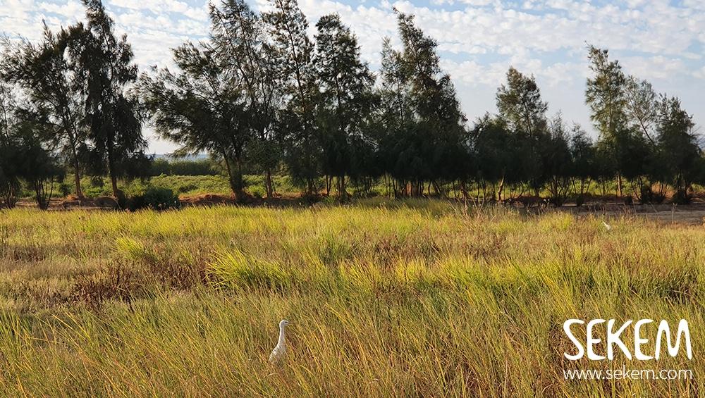 SEKEMs Wüstenfarm Wahat wird immer grüner und grüner und damit reich an Biodiversität.